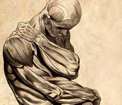 Human-Musculature-1