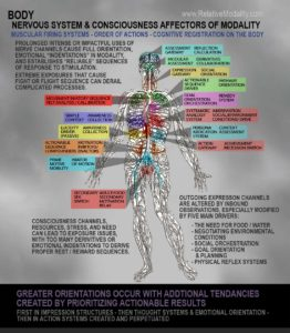 Human Nervous system with focal points of nervous activity outlined. These focal points center around major iniators of action and emtion, such as the heart, stomach, abdominal muscles, seat of the abdomen, upper thighs, chest, throat, brain, and facial structures