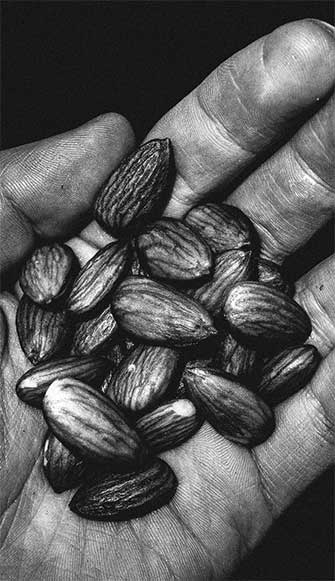hand-seeds-web-2