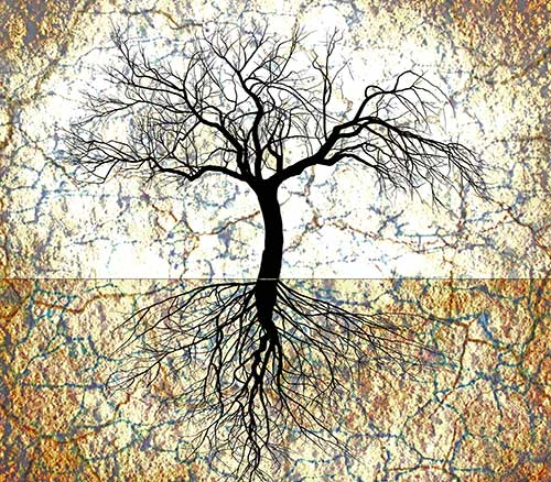 TREE-ROOTS-AND-TOP-web1